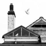 Holubí dům